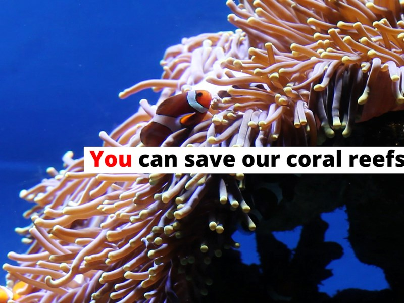 Corals are Dying